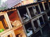 Продаются домашние кролики